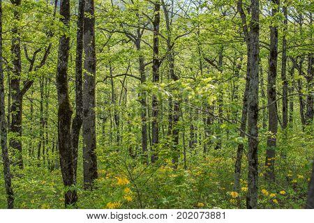 Forest landscape. Oak green grove. Selective focus.