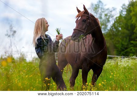 Smiling and beautiful young woman feeding her adult arabian horse standing in a field. Relationship between human and animal.