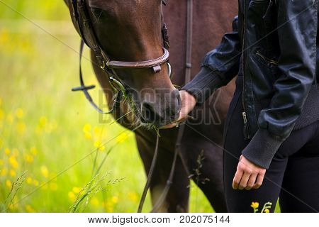 Close-up of a young woman feeding her adult arabian horse standing in a field. Relationship between human and animal.