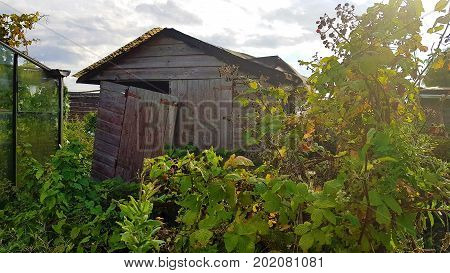 dilapidated and overgrown shed on an allotment