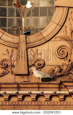 Traditional old seaside town hippodrome theatre facade with seagull. British holiday resort variety performance building.