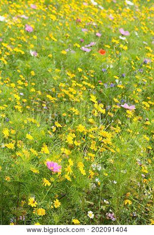 Beautiful various wildflowers growing in a meadow