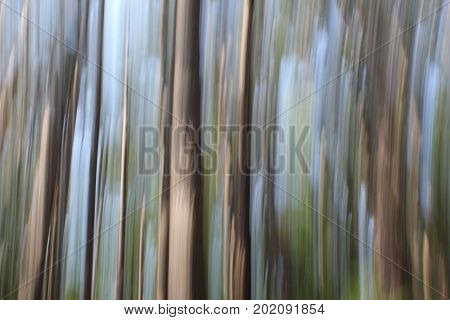 Beautiful background image of the woods, with technique known as panning, creates a dreamy, abstract scene.