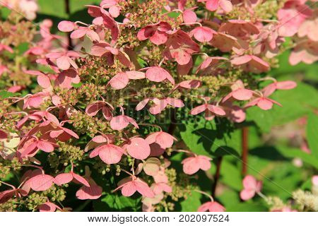 Horizontal image of beautiful pink flower petals on lush green plants in garden.