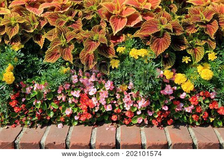 Low brick wall used as edging for bright and colorful garden