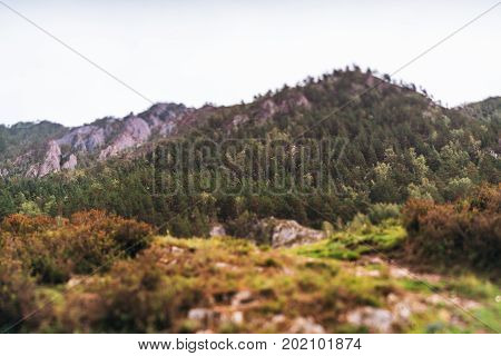 True tilt-shift shooting of overgrown with pine trees mountain on autumn day with ridge on defocused background Altai mountains near Kuyus district Russia