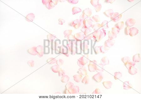 Pink rose petals pattern on white background. Flat lay top view. Valentine's background. Pattern of flowers.