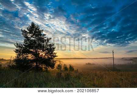 Rustic autumn landscape at dawn. The beautiful azure sky with white Cirrus clouds. Wildlife. A thick Golden mist in the field in the background. The sun rises over the horizon and illuminates the mist. Lone pine silhouette in the foreground. Early in the