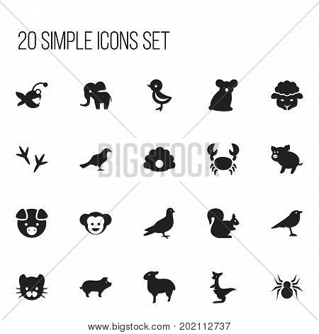 Set Of 20 Editable Zoology Icons. Includes Symbols Such As Pigeon, Wild Rodent, Conch And More