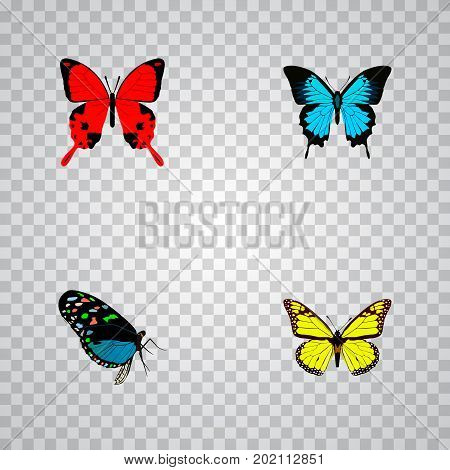 Realistic Papilio Ulysses, Sangaris, Hairstreak And Other Vector Elements