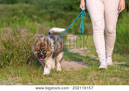 Woman Walking With An Elo Puppy At The Leash