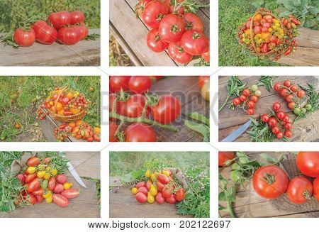 Colorful Collage Of Ripe Tomatoes
