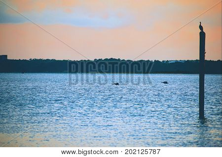 A colorful waterscape view of Herron birds flying low over coastal waters