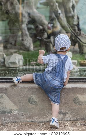 Baby boy getting closer to the monkey enclosure. He is climbing by glass protection