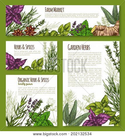 Spices and herbs vector posters and banners templates for herbal seasonings market. Vector farm garden thyme, lavender or peppermint and black pepper or anise, cinnamon or oregano and green basil
