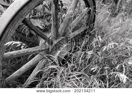 A black and white image of an old wooden wagon wheel partial hidden in tall grass.