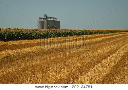 Grain Silo Bins in Farm Field Agricultural Landscape.