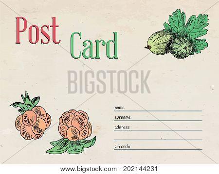 berries garden postcard envelope template design and illustration cloudberry, gooseberry