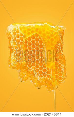 Sweet honeycomb with honey on yellow studio background