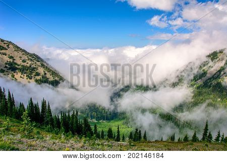 Hurricane Ridge In the mountains of the Olympic National Park, Washington state