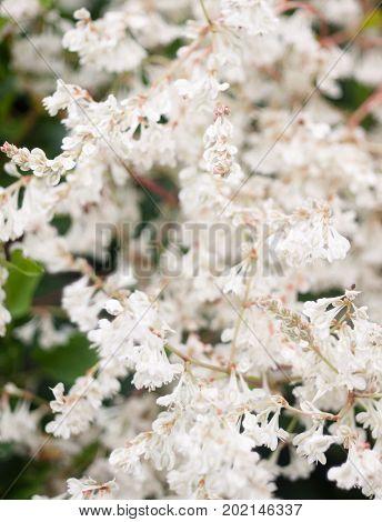 Close Up Of Common Yarrow Plant Tree