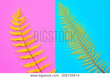 Autumn Arrives. Fall Leaves Background. Fall Fashion Design. Art Gallery. Minimal. Yellow Fern Leaves Tropical. Autumn fashion Vintage Concept