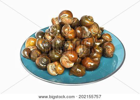 Pond snail, Marsh snail, River snail .