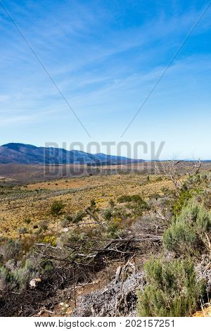 Dry Bushes In The Field With Mountains