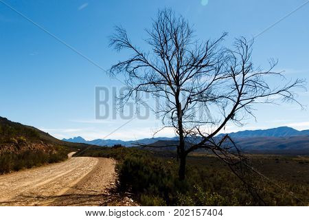 Landscape With Dusty Road And Tree With Mountains