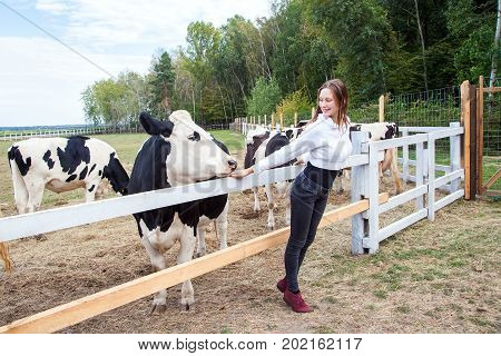 Love To The Animals. Cow And Girl Look At Each Other.
