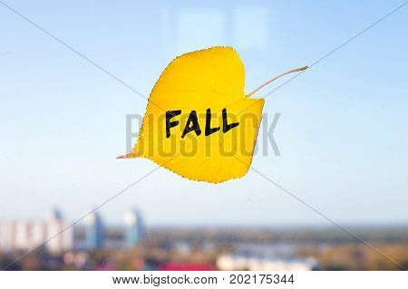 Yellow Fallen Leaf Labeled Fall Stuck To The Window On The Skyline