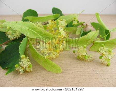Fresh flowers from limewood on a wooden board