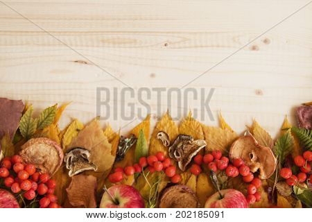 Border From Dry Colorful Autumn Leaves, Dry And Fresh Mushrooms, Fresh Rose Hips And Rowanberry, Fre