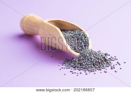 Blue poppy seeds in wooden scoop. Poppy on purple background.