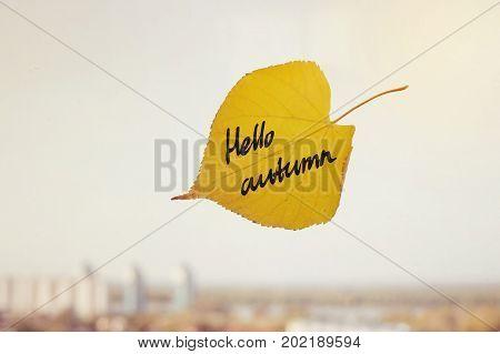 The Inscription Hello Autumn Yellow Leaf Closeup.