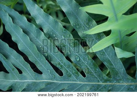 tropical plant green foliage with water drops background