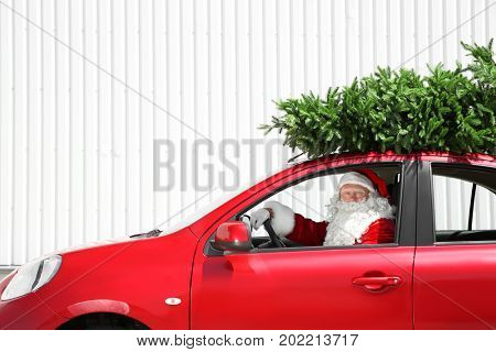 Authentic Santa Claus driving car with fir tree on it's top