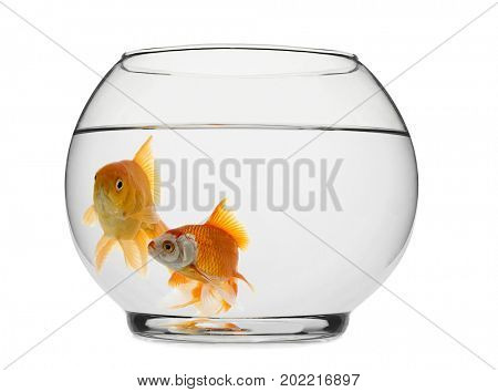 Goldfishes in Fishbowl
