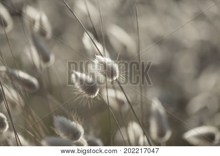 Dry Grasses With