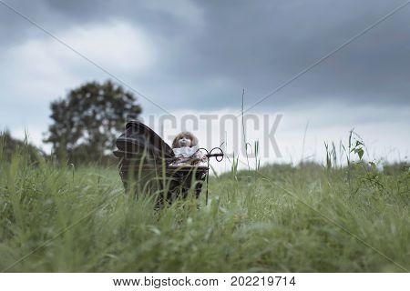 Spooky Doll In Pram Standing In Field Under Dark Stormy Sky.