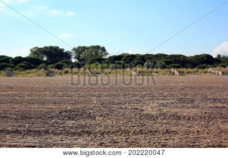 Typical Mediterranean Vegetation With Sand And Shrubs Called Med
