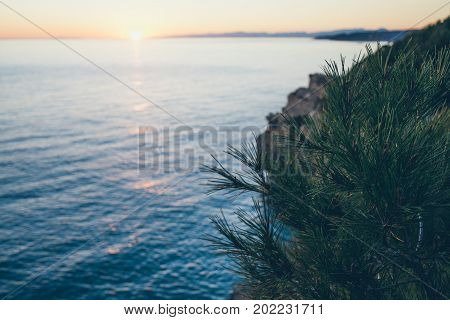 Summer colorful sunset landscape on the sea. Soft and warm atmosphere selective focus. Spreading summer birch at the edge of the cliff under bright summer sunbeams. Sunny summer evening background.