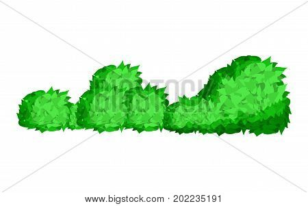 Bushes natural wild image. Elements of natural forest landscapes, flat design vector illustration. Green bush leaves tree forest isolated on white background