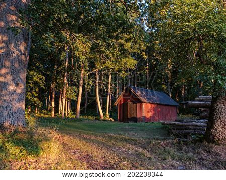 A shed in the forest on a sunny evening