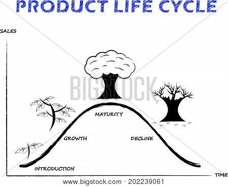 Black & White Product Life Cycle Diagram Is Drew By Pencil Or Charcoal on White Background Designed as Tree Growing Four Stages Introduction Growth Maturity Decline.