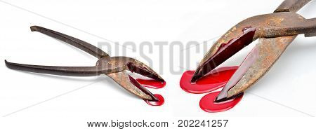 cutter tongue with blood on a white background close up