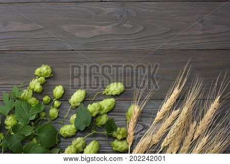 Beer Brewing Ingredients Hop And Wheat Ears On Dark Wooden Table. Beer Brewery Concept. Beer Backgro
