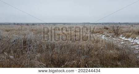 Winter landscape with wilted thistle in a frozen grass field