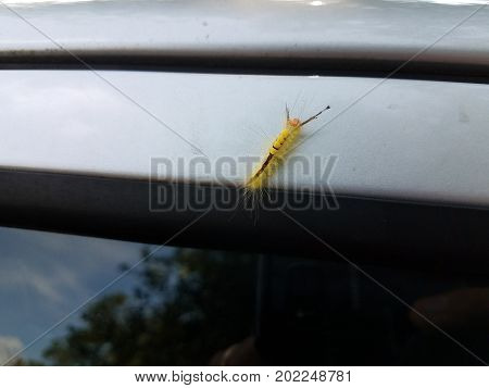 a fuzzy caterpillar crawling on top of a car
