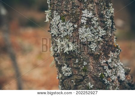 Tree trunk texture and background with moss and lichen. Mossy bark tree texture. Abstract texture and background for designers. Macro view of mossy tree trunk. Moss texture and background.